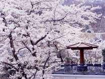 春には桜の美しさに包まれて、花びら舞う湯は凛々とした花いかだ。桜色の華やかな花見露天風呂を。
