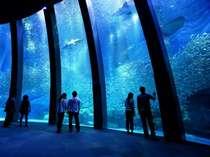 【アクアミュージアム】 「群れと輝きの魚たち」5万尾のイワシたち☆☆