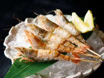 珍しい白虎海老は春頃の別注料理でご提供することもございます。