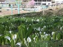 ◆【春】ホテルサンバード外観(水芭蕉)◆