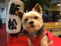 【かわいい愛犬[小型犬]と一緒♪】夕食はお部屋食★ワンちゃんと一緒に温泉へ行こう♪★1泊2食付プラン