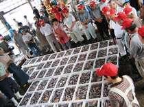 【海の京都★秋の特別プラン】9月1日底引網漁解禁!丹後地酒に合う魚♪七輪で熱々の沖ギスを食べ放題で♪