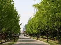都会の中のオアシス、中島公園までは歩いて5分。お散歩に最適です。