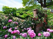 【アカオハーブ&ローズガーデン】ほのかな香りと色とりどりのバラが魅了