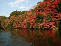 関東で一番遅い亀山湖上紅葉は一見の価値あり。絶対見に来て後悔なし