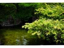 武家屋敷風の平屋一階建の中心に造られた日本庭園