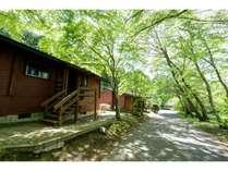 カナダ産ログハウス(春夏の外観)/緑が美しいログハウスの外観です