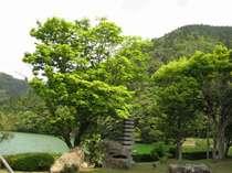 ■庭園■初夏の庭園。まさに新緑!ロビーから眺める風景は絶品♪