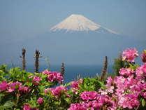 マリンママのお気に入りの1枚♪春の「富士山とツツジ」の写真です。
