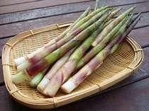 【春を味わう】期間限定:通常コース+焼き竹の子+竹の子天ぷら+ワラビ採り