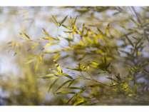爽やかな風にそよぐ竹の葉の音に心が和みます