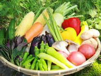 ◆地元の新鮮な野菜