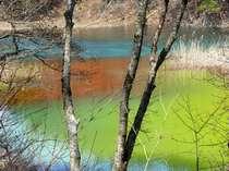 色の変化が美しい深泥沼(五色沼)