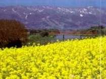春の信州花めぐり♪♪