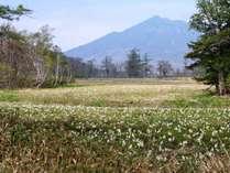 尾瀬国立公園_山