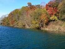 紅葉に染まる木々と紺碧の支笏湖