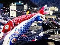 【渓流鯉のぼり】豊平川沿いに数百匹の鯉が泳ぐ、定山渓春の風物詩