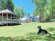 天然芝の1000㎡超のドッグラン(ガーデンハウスあり)