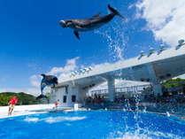 ★イルカや魚たちに会いに行こう!九十九島水族館「海きらら」プラン。入館引換券付