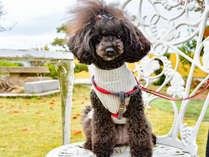 *【看板犬】タイミングがあえばかわいい看板犬と出会えます♪