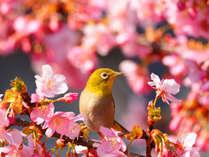 桜まつりイメージ