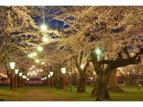 ライトアップされた夜桜が楽しめる青葉ヶ丘公園は町民にも人気のスポット