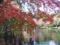 紅葉に染まる雲場の池