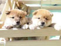 【愛犬と湖畔で過ごす寛ぎのひと時】~1泊分ペットゲージ無料~ スタンダード会席「花雫」を味わう。