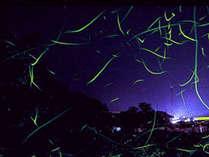 【ホタル鑑賞プラン】幻想的な夜を愉しむ…初夏の風物詩◆田口町ホタルの里◆