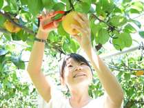 ●秋限定!梨1kgお土産つきでお得♪●フルーツの里あさくらで★もぎたて!秋の味覚【梨】狩り体験プラン