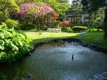 庭園:春の桜春には様々な種類の桜が咲き乱れます♪池には鯉が悠々と泳いでおります