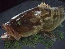 【冬の味覚】-幻の高級魚『九絵(くえ)』を食す-【くえづくしプラン】