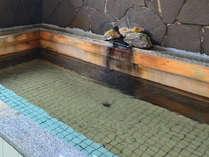 phが8.5以上と高く、アルカリ性に特徴があります。美肌の湯としても有名です。