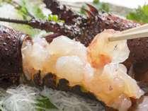 **【伊豆味覚一例】伊勢海老の解禁お祝いで新鮮なぷりぷり伊勢海老のお刺身を付けちゃいます。