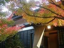 秋は、敷地内の木々も美しく色づきます。