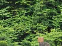 3000坪の敷地では、大自然の中に現代アート作品も楽しみながらお散歩も!