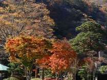 秋の紅葉は10月から