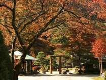 秋の紅葉シーズンは10月下旬から11月上旬