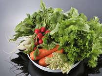 ◆こだわり食材◆新鮮な有機野菜で身体の中から元気に♪