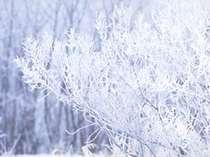*さらさらパウダースノーで雪遊び★の画像