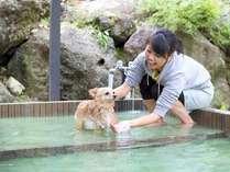 *専用の温泉でペットもほっこり湯治中。もちろんこのお湯もトロトロです。