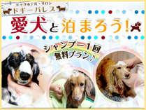 愛犬と泊まろう!☆\1回無料シャンプー/プラン
