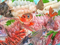*【活き造りプラン】日本海の荒波にもまれた魚介は、極めつけの美味しさ。獲れたて・捌きたてをどうぞ!