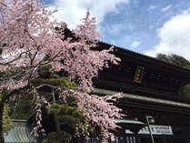 *身延山久遠寺の桜/周辺は、日本さくらの名所100選に選ばれ、全国有数の桜の名所。