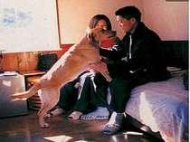 ペットと泊まる宿 サンデッキ