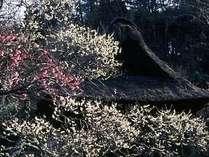 東慶寺の紅白梅