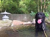 【犬専用露天風呂】ぬるめの優しい温泉で看板犬ルイくんも大好きです♪/無料