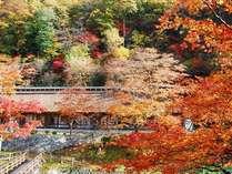 【晩秋】築160年以上の茅葺き屋根 客室梅の間外観