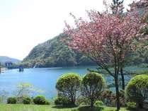 広瀬湖と桜