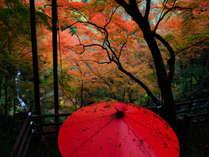 大洲市 白滝公園にて滝と紅葉が楽しめるスポットです♪♪